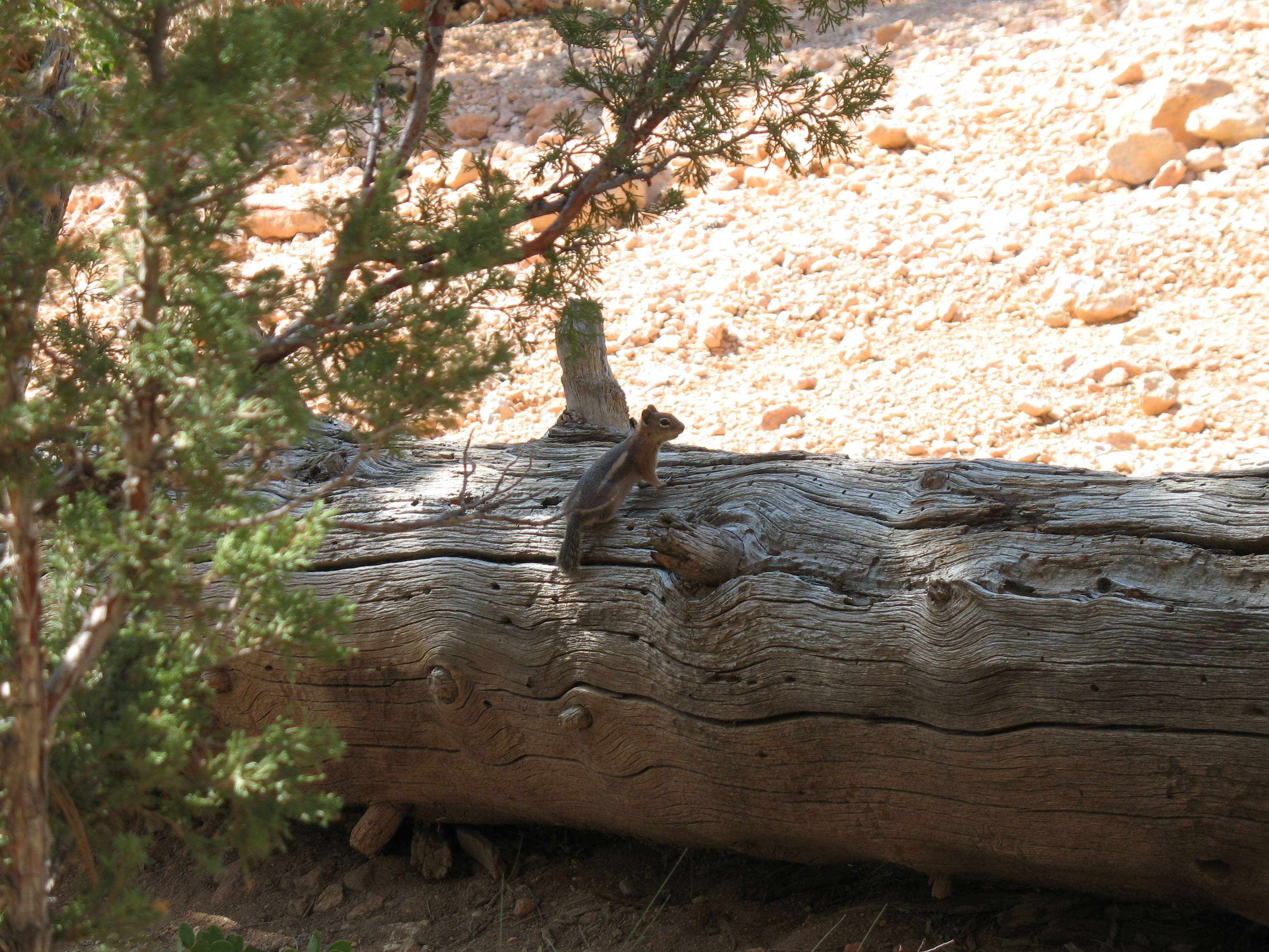 Ouest Usa 2009 187 Archives 187 Jour 5 Bryce Canyon Np